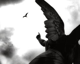 Ángel y pájaro